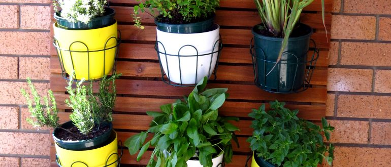 grow your own food my productive backyard diy gardening garden southern highlands wildes meadow burrawang robertson garden consultant grow your own good food balcony garden container gardening growing food in pots