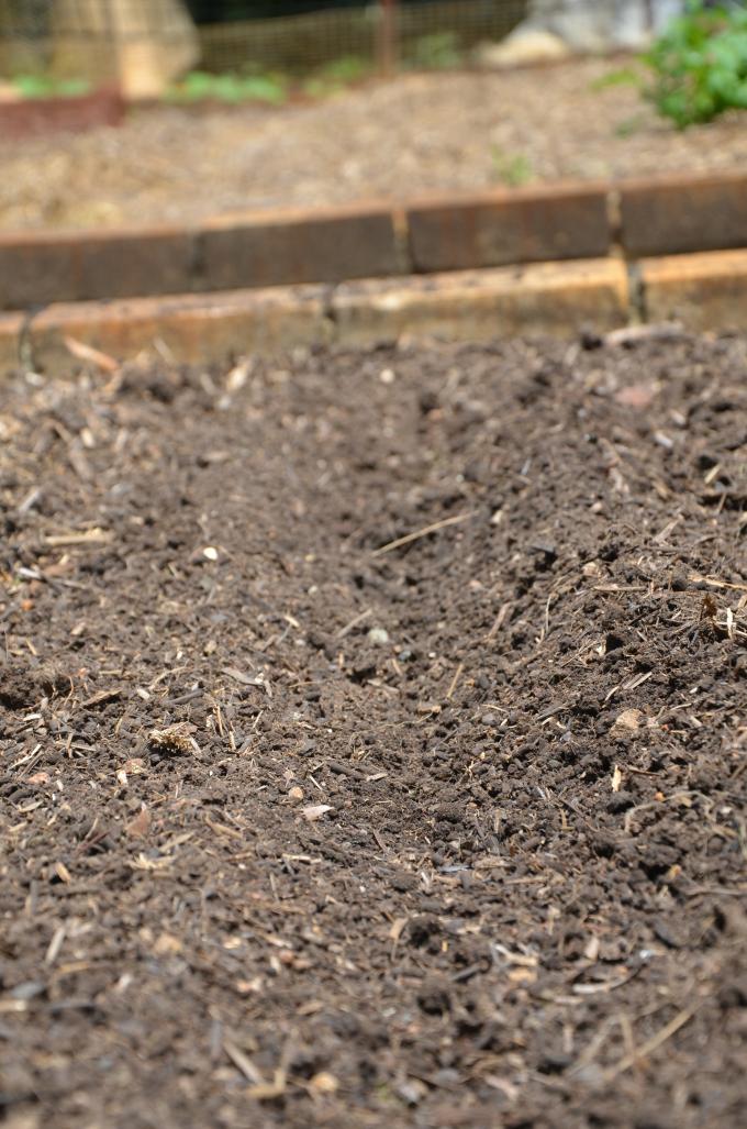 furrow planting seeds snowpeas successove planting