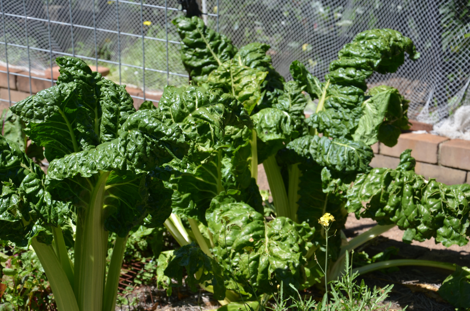 Preparing Your Spring And Summer Vegetable Garden My Productive Backyard Learn To Grow Your
