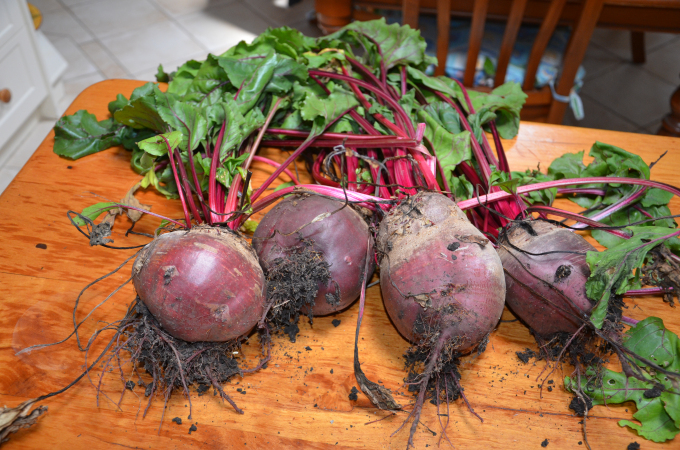 Pick your beets wash and remove tops and roots