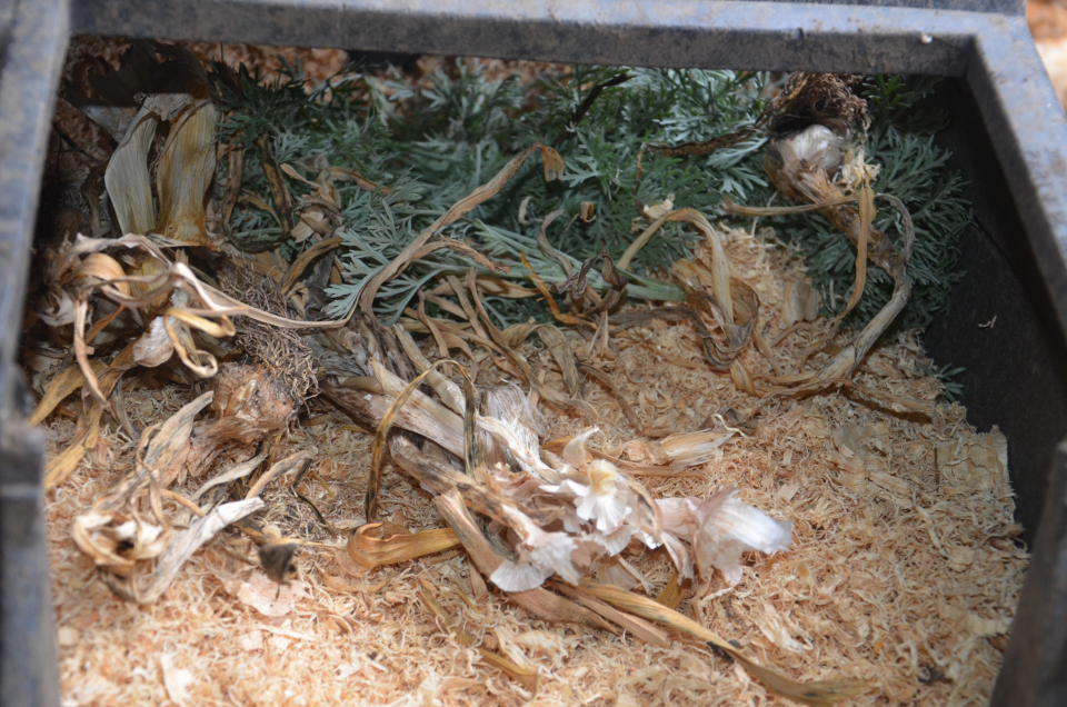 Adding wormwood and dried garlic leaves to your nesting boxes prevents lice and mite infestations.