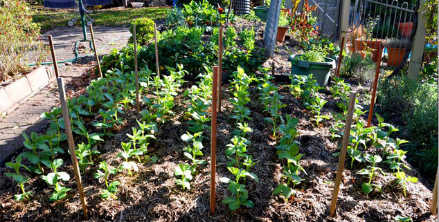 Preparing Your Spring and Summer Vegetable Garden My Productive