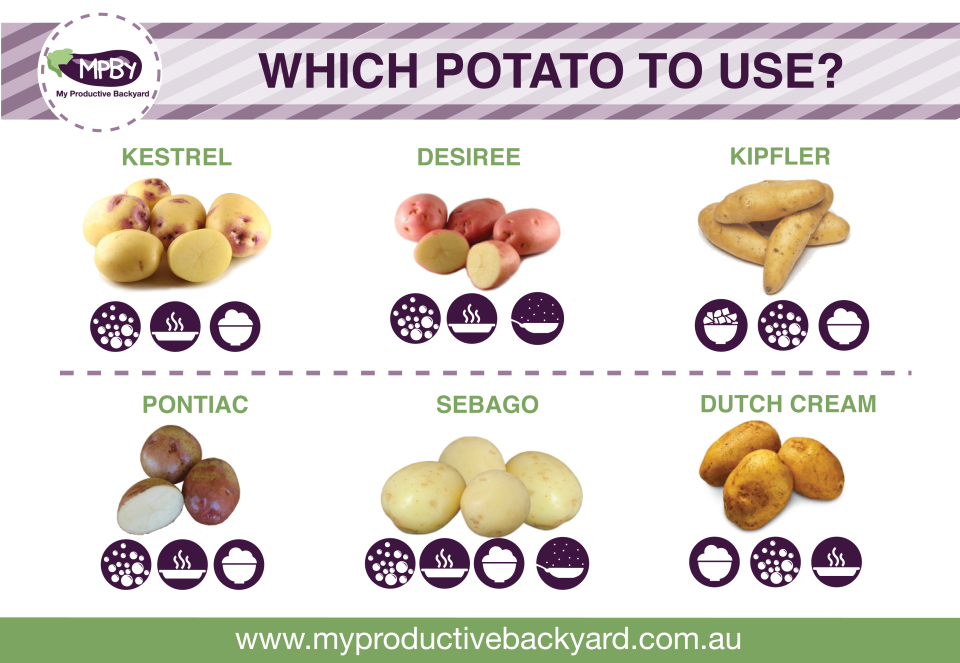 Potatoes Which Ones To Grow And How To Cook Them 187 My
