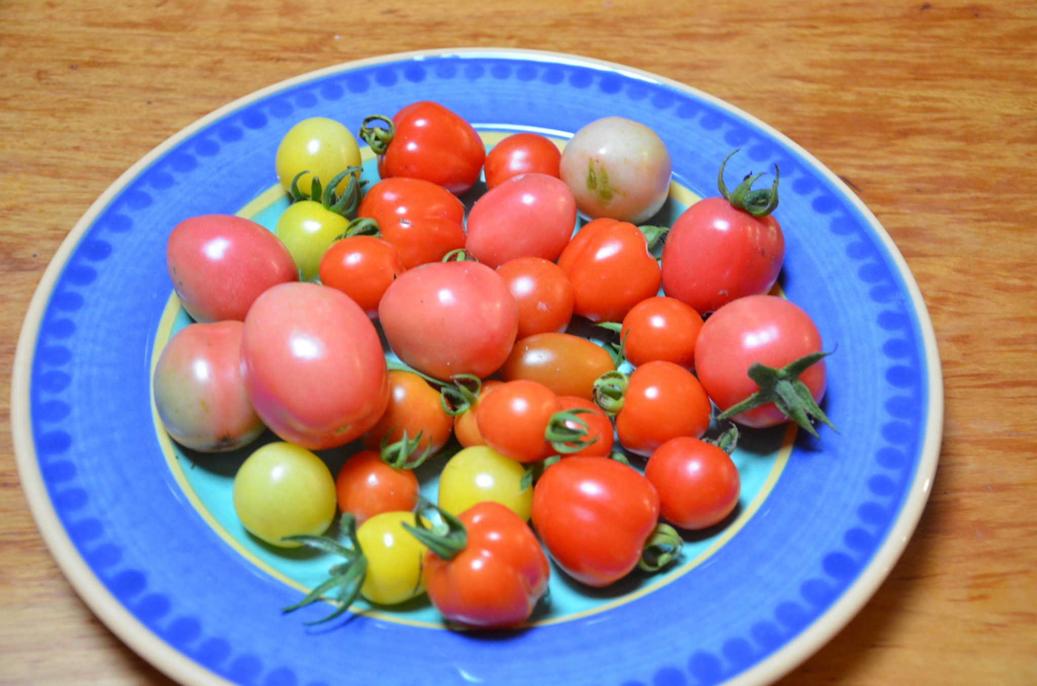 grow your own food my productive backyard diy gardening garden southern highlands wildes meadow burrawang robertson garden consultant grow your own good food growing cherry tomatoes self sown