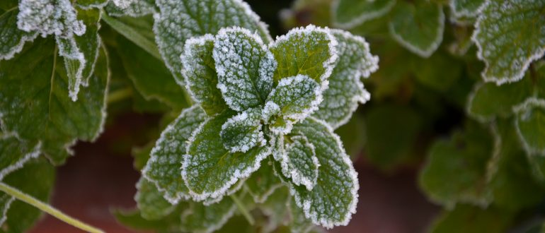 grow your own food my productive backyard diy gardening garden southern highlands wildes meadow burrawang robertson garden consultant grow your own good food growing frost mint