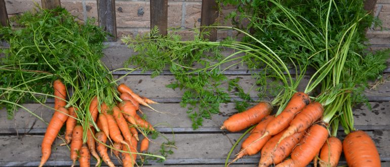 grow your own food my productive backyard diy gardening garden southern highlands wildes meadow burrawang robertson garden consultant grow your own good food growing carrots