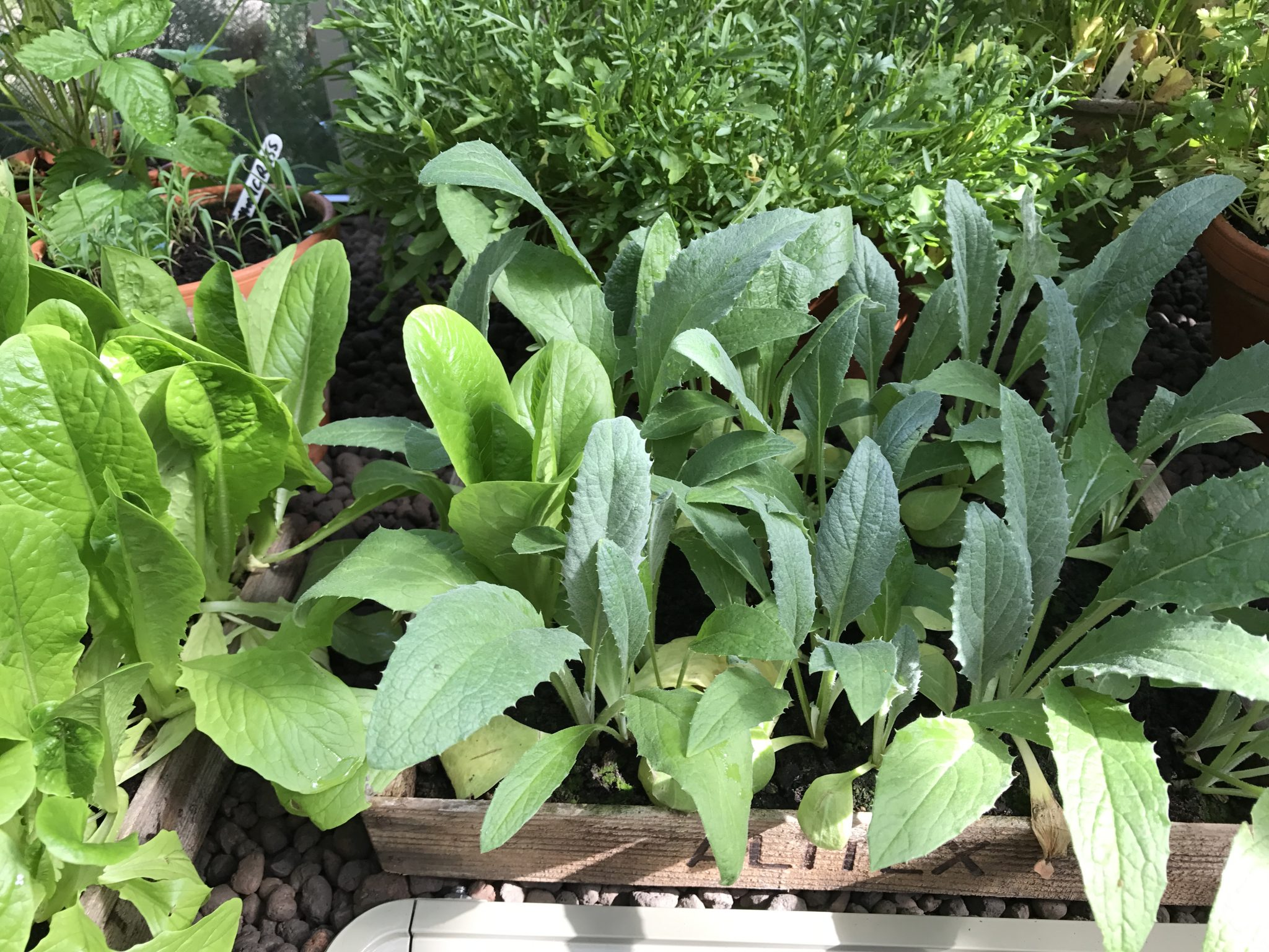 grow your own food my productive backyard diy gardening garden southern highlands wildes meadow burrawang robertson garden consultant grow your own good food growing plastic free garden